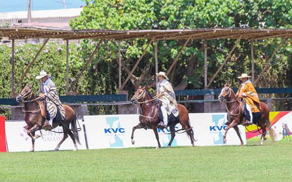 Concurso de caballos de paso